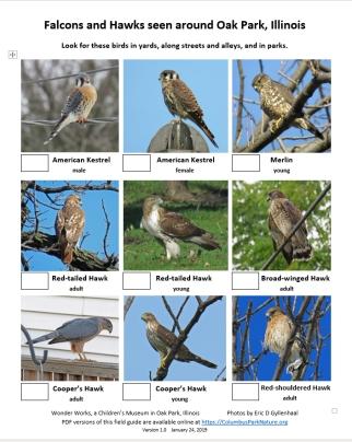 falconshawkschecklist