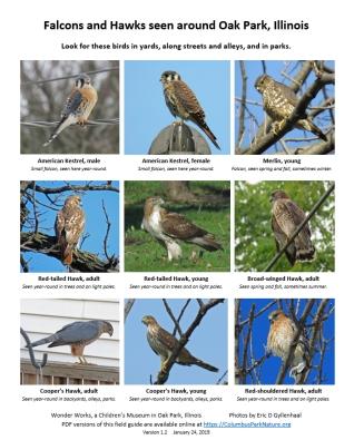 falconshawksfieldguide