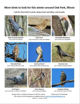 morebirdsfieldguide