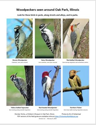WoodpeckersFieldGuide