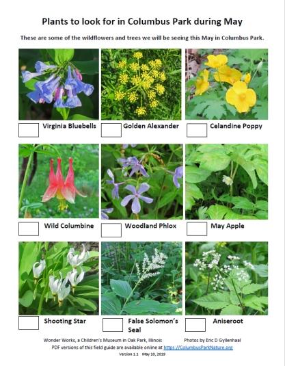 MidMayWildflowers
