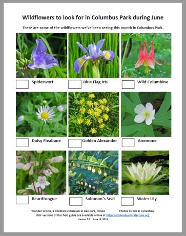JuneWildflowers