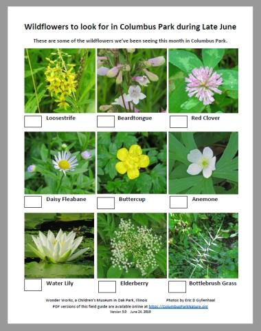 LateJuneWildflowers