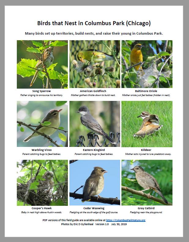 BirdsThatNest