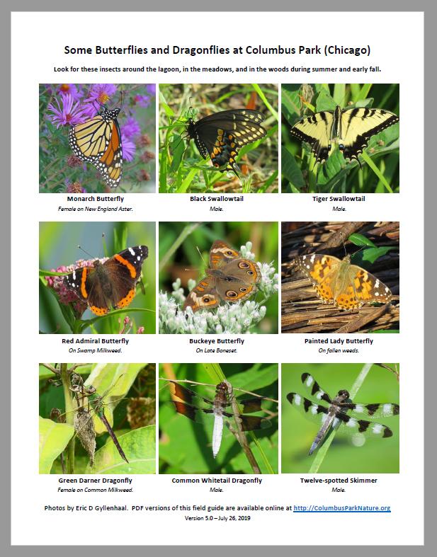 Butterflies-Dragonflies-Columbus