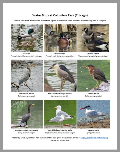 Water-Birds-4.0
