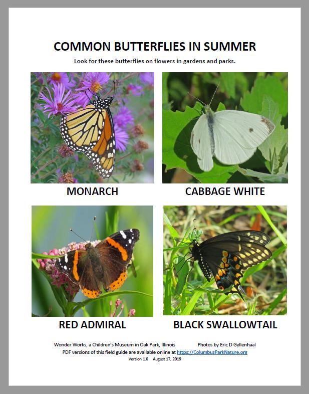 CommonButterfliesSummer