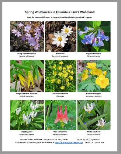 EarlySpringWildflowers