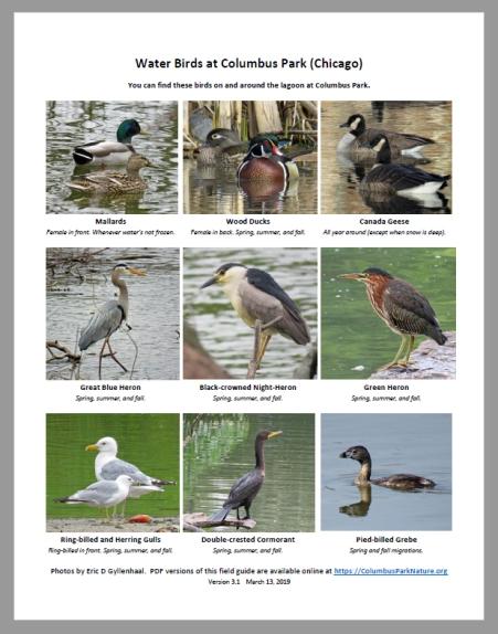 Water-Birds-at-Columbus-Par